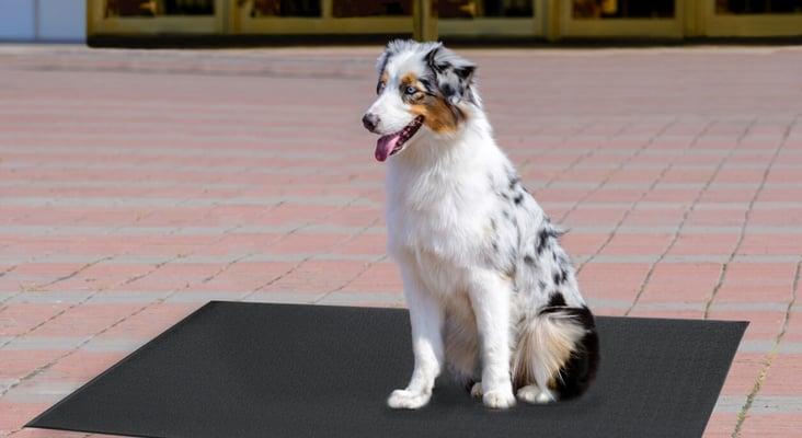 dog comfort king 2-optimized